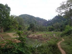La traversée des champs jusqu'à la cascade de Tat Suong.