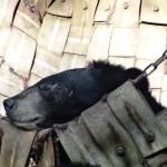 Un ours bienheureux dans son hamac.
