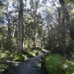 Une partie du Kepler track traverse la forêt.