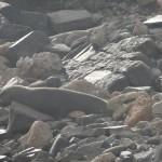 Un lion de mer dort confortablement (!) sur les rochers.