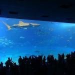 Une petite foule tente de maintenir ce requin baleine à distance avec des téléphones portables.