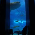Val envisage d'installer un aquarium du même genre chez nous.