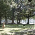 Un cerf solitaire dans un des parcs de Nara.