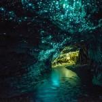 Lumière éteinte, ces vers luisants font baigner les galeries dans une belle lueur bleutée (image empruntée à un autre site, les photos n'étaient pas autorisées).