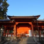 Un cerf passe nonchalamment près des portes d'un temple.