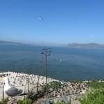 Sur les rives d'Alcatraz, de nombreux cormorans ont trouvé refuge.