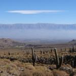 """Au nord de Tafi, on traverse une partie du parc national de """"los cardones"""" (un type de cactus)."""