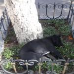 Sur la place centrale de Sucre, un chien a trouvé l'endroit idéal pour la sieste.