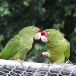 Diner aux chandelles pour ces 2 oiseaux.
