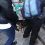 À l'entrée du Machu Picchu, un chien dort paisiblement sans se soucier de la foule.