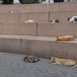 Un mini-amphithéâtre du parc Kennedy est envahi par les chats.