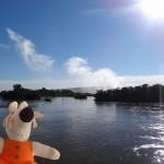 Le rio Iguazu semble bien paisible... juste avant de chuter de plusieurs dizaines de mètres.