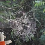 Joli travail pour cette araignée.
