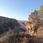 Mausi a rencontré un cerf sur la rive du grand canyon.