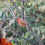 Un belle oiseau qui n'a pas voulu donner son nom à Mausi.