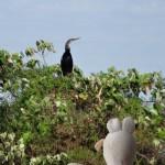 Un cormoran s'est posé au sommet de cet arbre.