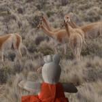 Un troupeau de vigognes sauvages. Ils sont de la famille des lamas.