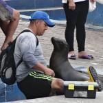 Ce pêcheur, en train de vider l'eau de mer de ses bottes, est très attendu.
