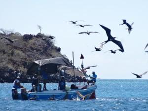 Près des rives de l'île Baltra (où se trouve l'aéroport principal des Galápagos), des pêcheurs sont l'objet de toutes les attentions.