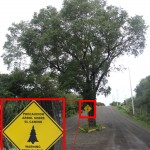 Un arbre ? Où ça ?