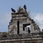 Des urubus noirs observent les ruines de Kabah.